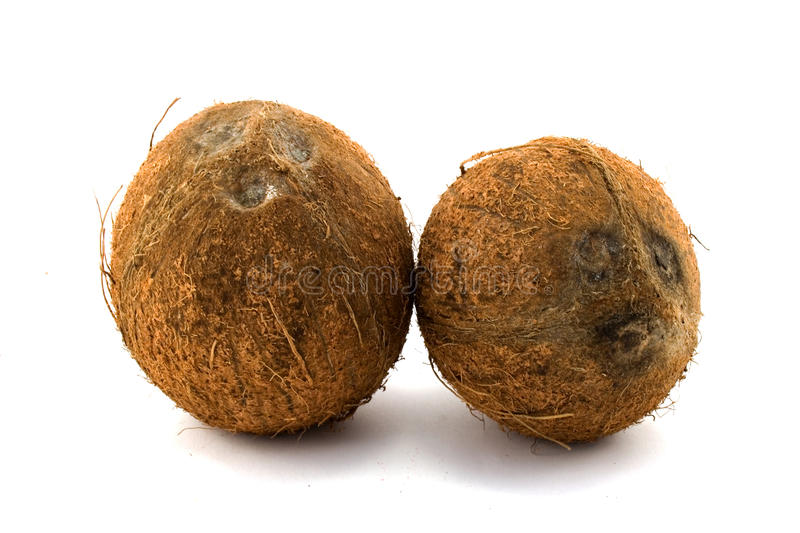 Download Two Coconuts Royalty Free Stock Images - Image: 12674709