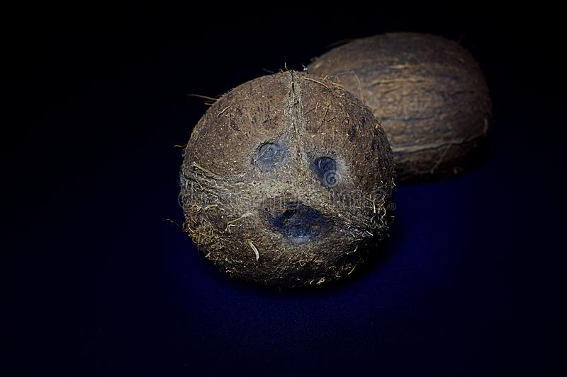 Two coconuts on a dark navy background stock photo