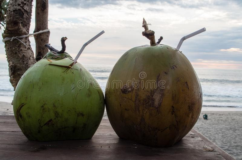 Two coconuts enjoying a beach day.  royalty free stock photo