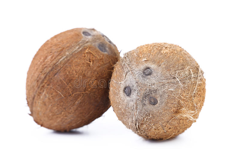 Download Two coconuts stock photo. Image of coconut, brown, hairy - 33914122