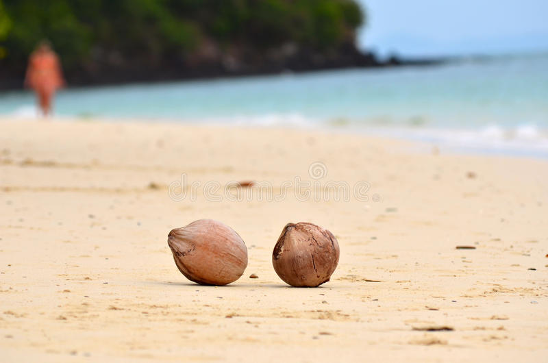 Two coconuts on the sandy sea shore. royalty free stock image