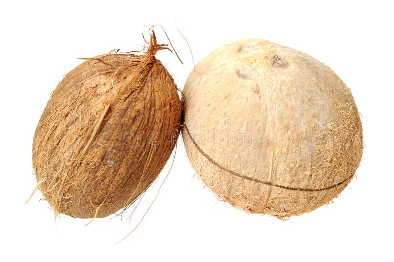 Download Two coconuts stock image. Image of gourmet, shadow, food - 30187035