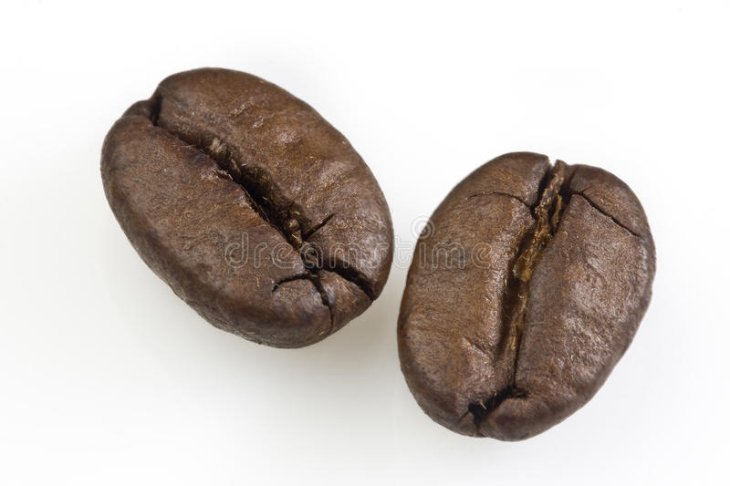 Two Coffee beans. Close up shot of two coffee beans on a white background royalty free stock photography