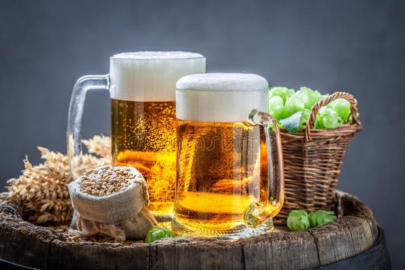 Two cold light beers with foam, hops and wheat. On dark background stock image
