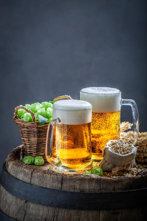 Two cold light beers with foam, wheat and hops. On dark background royalty free stock image