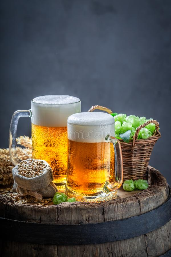 Two cold light beers with hops on old barrel. Two cold light beers with hops on old wooden barrel royalty free stock photos