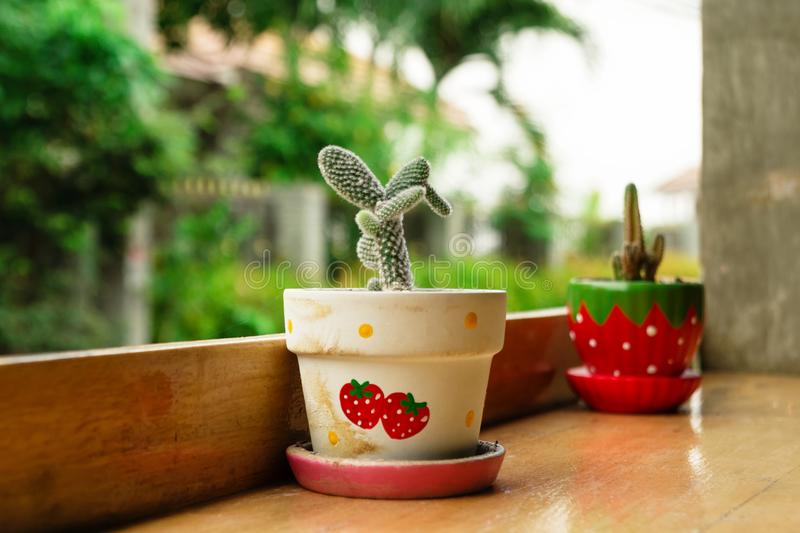 Two colorful pots with cactus on a wooden table. stock photography