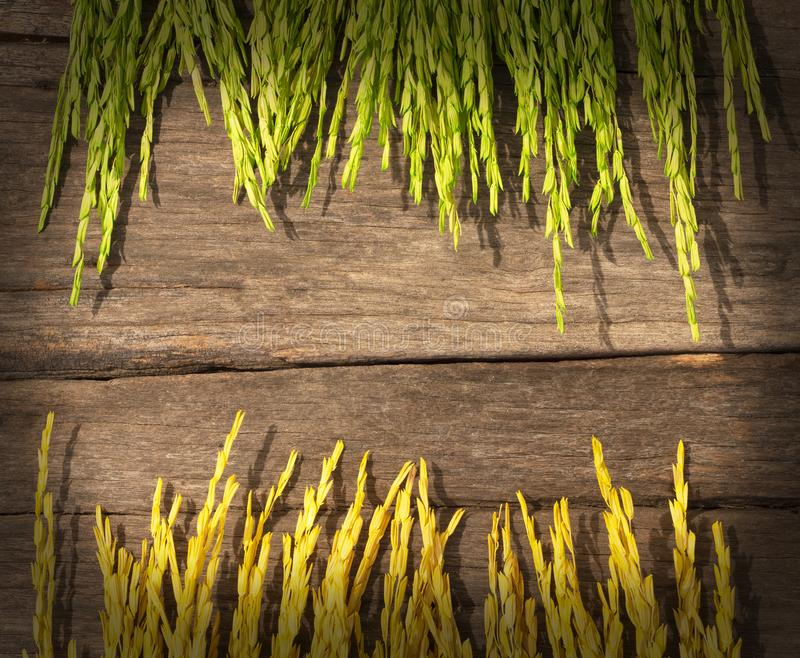 Two colors of rice, Dry golden yellow rice and Dry green rice put on the old wooden background royalty free stock photography