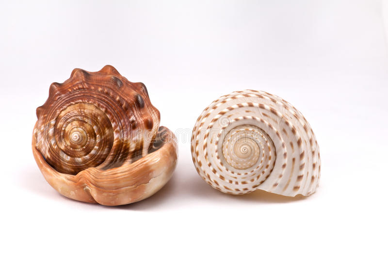 Download Two Conch Stock Photo - Image: 20678870