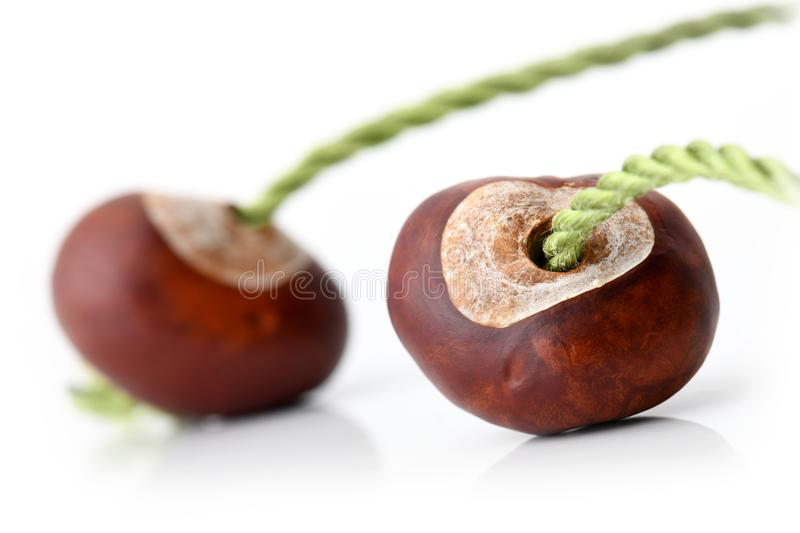 Two conkers with strings ready to play royalty free stock photo