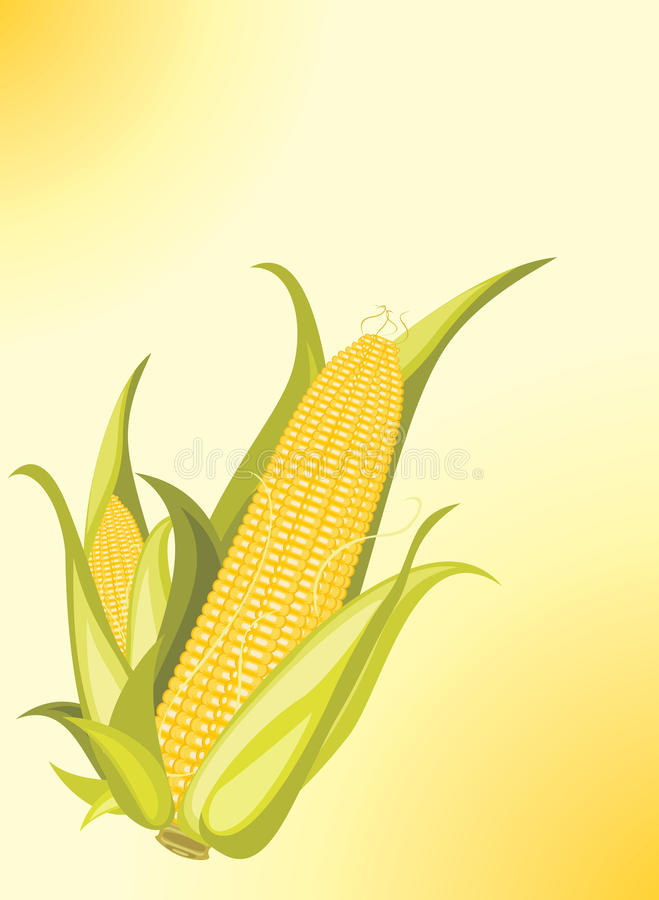 Download Two Corncobs On The Yellow Background Stock Photography - Image: 26328832