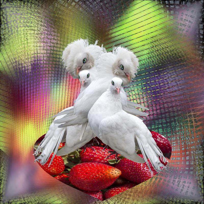 Two couple of white doves on a rainbow background. Two couple of white doves on the scarlet heart of fresh strawberries and rainbow background. Sexual revolution royalty free stock photos