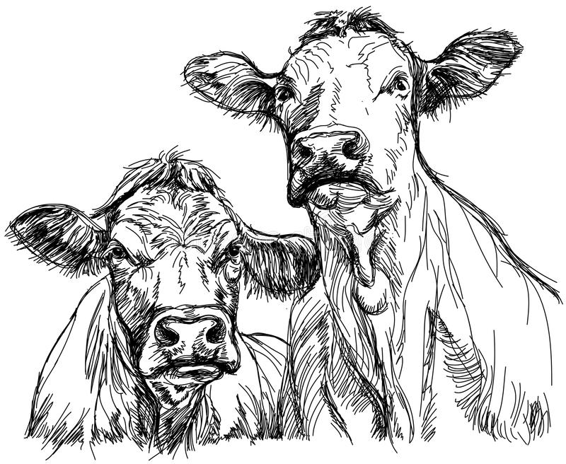 Two cows. Black and white sketch