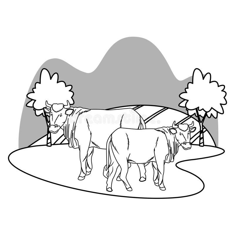 Two cows in nature scenery cartoon in black and white. Two cows in nature scenery cartoon vector illustration graphic design vector illustration