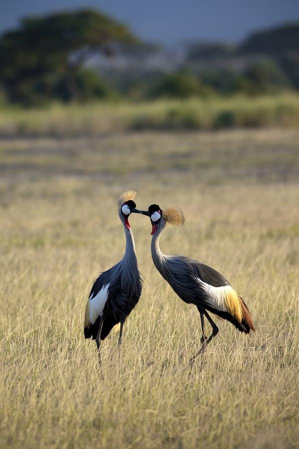 Free Two Cranes Stock Photos - 41088103
