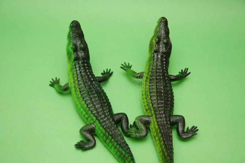 Download Two crocodiles stock photo. Image of gator, hunter, aquatic - 1438070