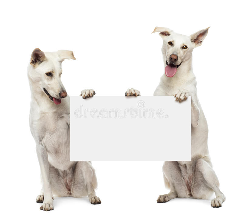 Free Two Crossbreed Dogs Sitting And Holding Royalty Free Stock Photo - 27272125