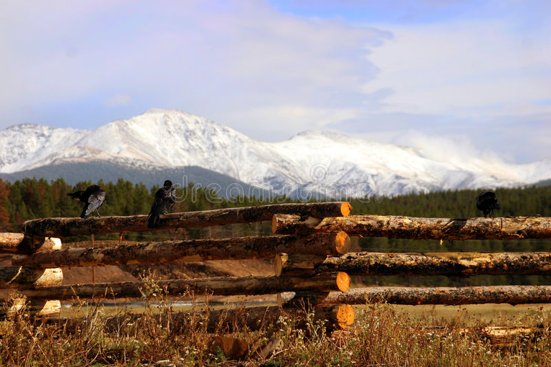 Two crows on fence with front range in the background royalty free stock photos
