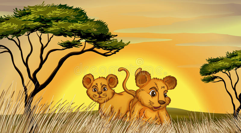 Two cubs. Illustration of two cubs in the jungle stock illustration