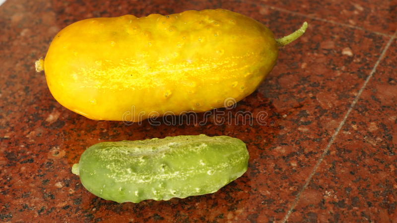Two Cucumbers royalty free stock photography