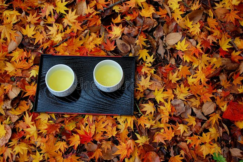 Two cups on leaves. Two cups of green tea on fallen leaves royalty free stock image