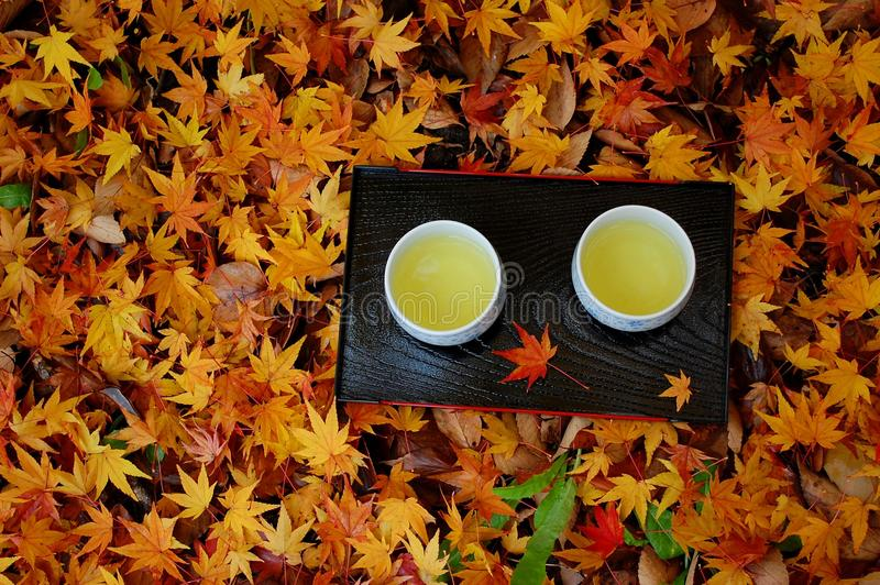 Two cups on leaves. Two cups of green tea on fallen leaves stock images