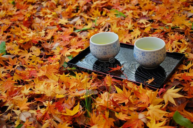 Two cups on leaves. Two cups of green tea on fallen leaves royalty free stock photo