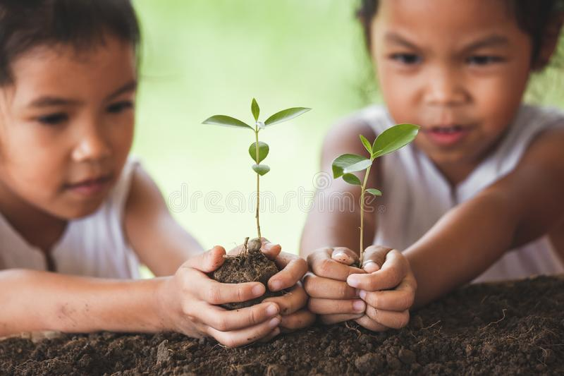 Two cute asian child girls planting young tree on black soil. Together with fun stock photos