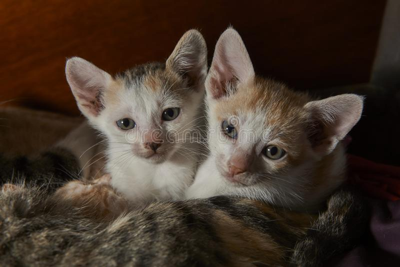 Two cute baby cats cuddling up to a mother cat.  royalty free stock photo
