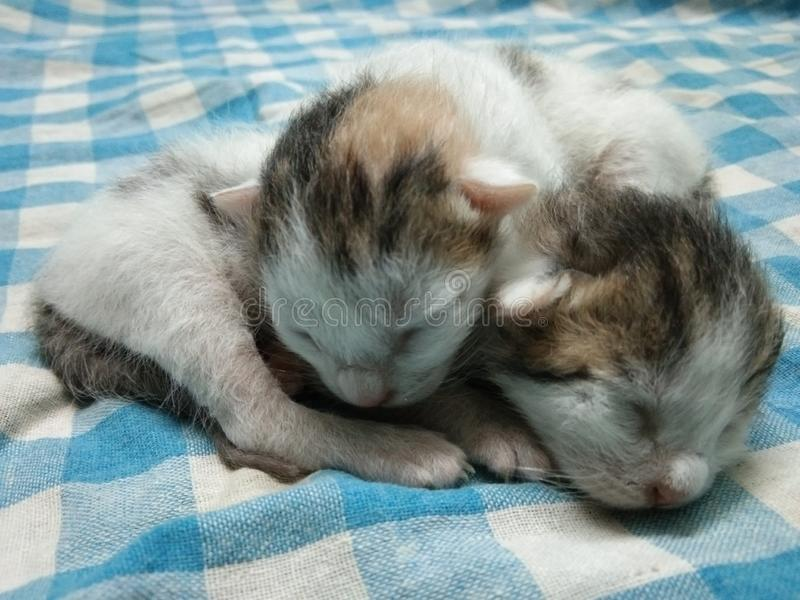 Two Cute Baby Cats Sleeping royalty free stock photos