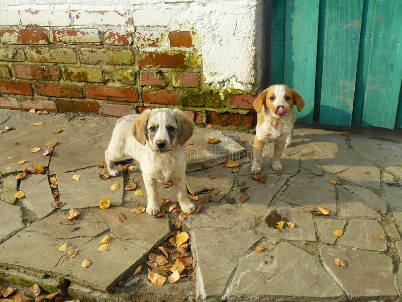 Cute puppies in the yard stock images