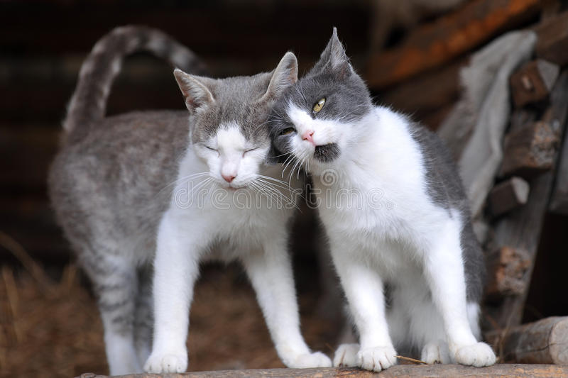 Two cute cats royalty free stock photography