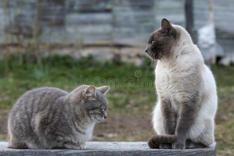 Two cute cats are sitting on a wooden bench, one is sleeping, the other is looking to the side, against the background of the wall stock images