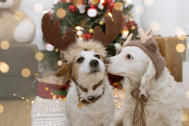 TWO CUTE DOGS UNDER THE CHRISTMAS LIGHT TREE WITH REINDEER HAT COSTUME royalty free stock photo