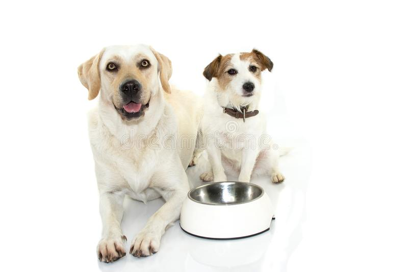 TWO CUTE DOGS WAITING FOR EAT WITH ITS EMPTY BOWL FOOD BETTWEEN. THEM. ISOLATED AGAINST WHITE BACKGROUND WITH COPY SPACE stock image