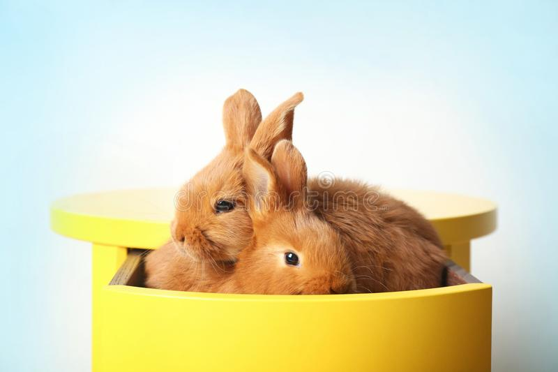 Two cute foxy rabbits sitting in drawer. Two cute foxy rabbits sitting in yellow drawer royalty free stock images