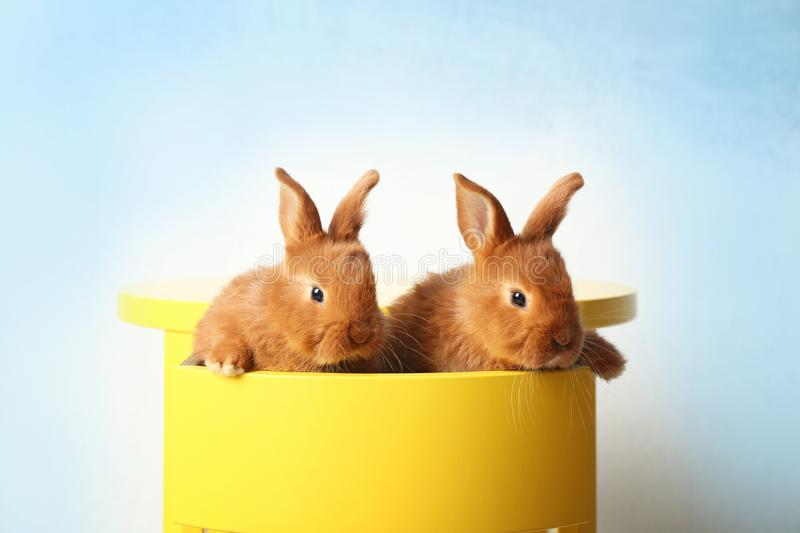 Two cute foxy rabbits sitting in drawer. Two cute foxy rabbits sitting in yellow drawer stock photography