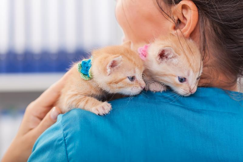 Two cute ginger kittens on the veterinary professional shoulder royalty free stock photos