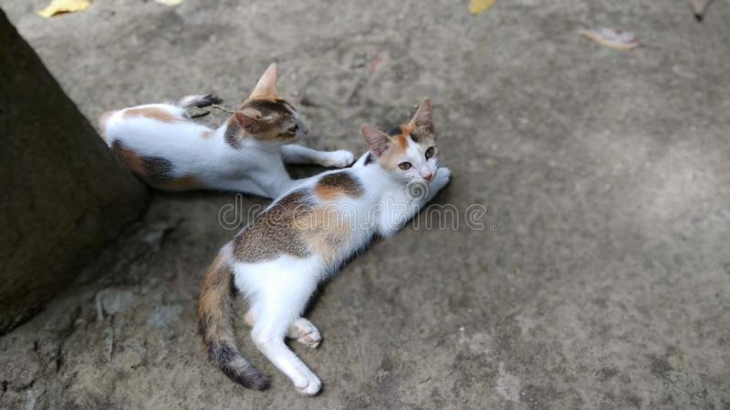 Two cute kitten on the ground royalty free stock photos