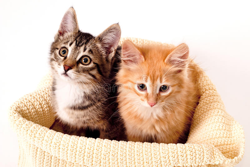 Two Cute Kittens Stock Photos