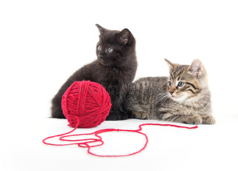 Two cute kittens and red yarn royalty free stock photography