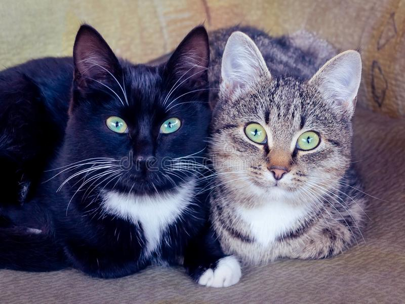 Two cute kitties, black and gray with stripes, with green eyes are lying on the chair and carefully looking forward stock image
