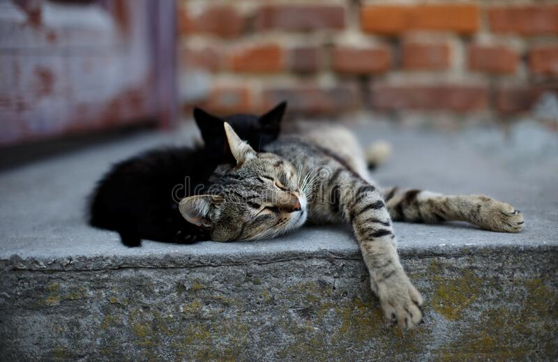 Two cute little cats sleeping.  royalty free stock photography