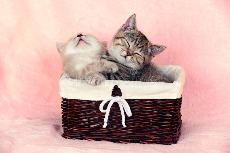 Two cute little kitten in a basket royalty free stock photos