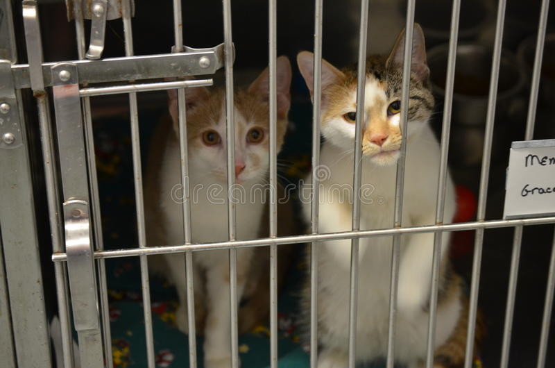 Two cute little Shelter Kittens royalty free stock photo