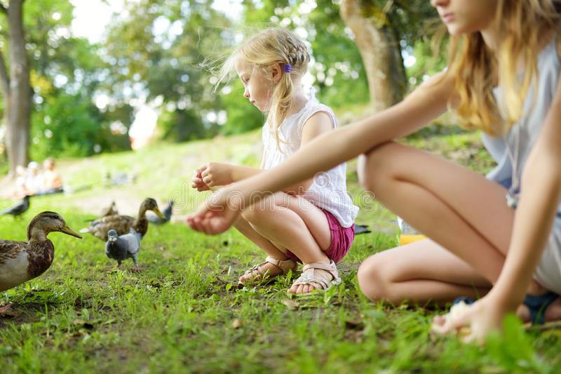 Two cute little sisters feeding birds on summer day. Children feeding pigeons and ducks outdoors. Active leisure with kids stock photography