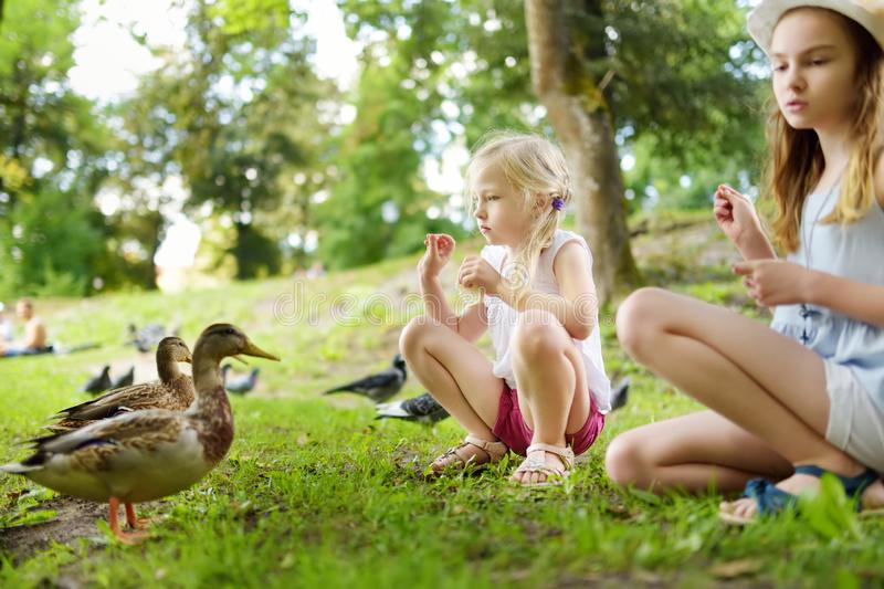 Two cute little sisters feeding birds on summer day. Children feeding pigeons and ducks outdoors. Active leisure with kids stock images