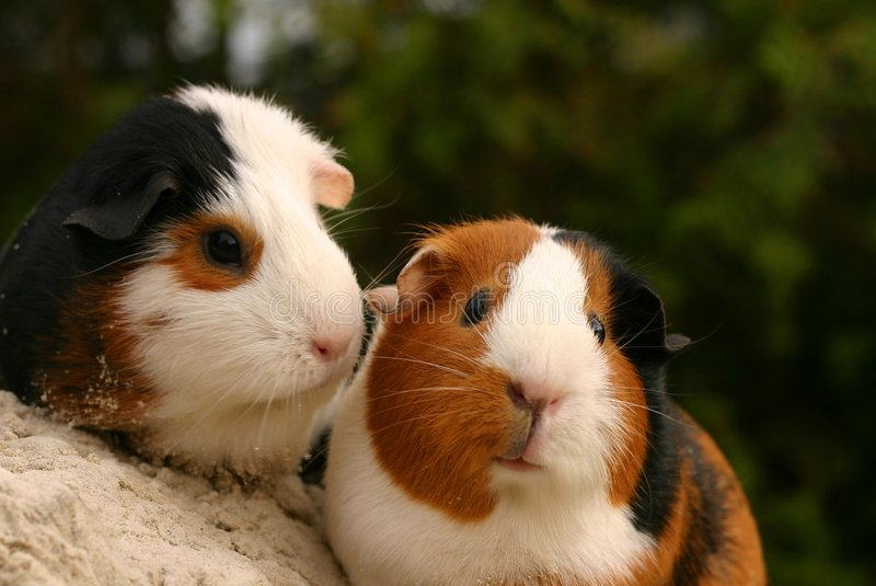 Two cute pets royalty free stock photo