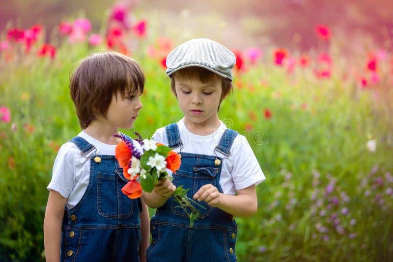 Two cute preschool children, boy brothers, in poppy field, holding a bouquet of wild flowers stock image