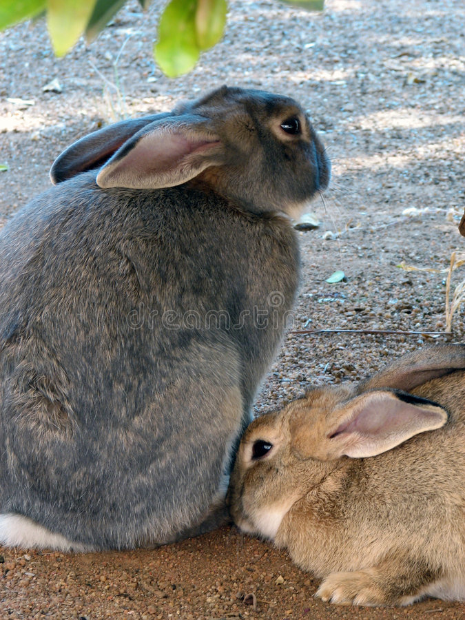Two cute Rabbits royalty free stock photography